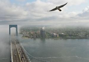falcon.02