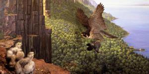 falcons.01